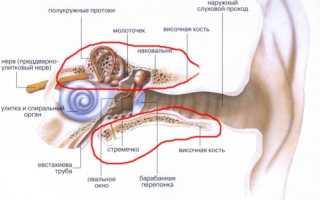Симптомы и лечебные меры при переломе ушной раковины