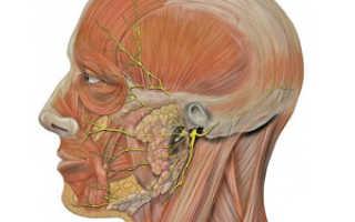 Признаки и последствия защемления лицевого нерва