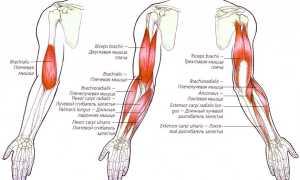 Как лечить растяжение связок и мышц на руке